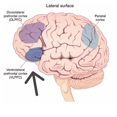 Ventrolaterale Prefrontale Cortex
