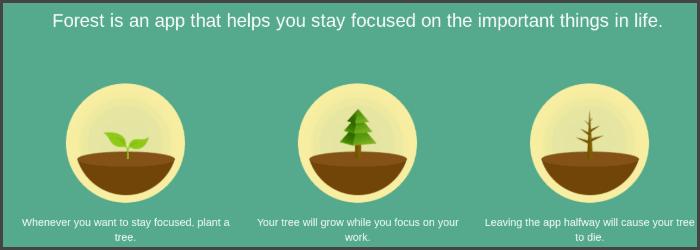 Forest plaatje website